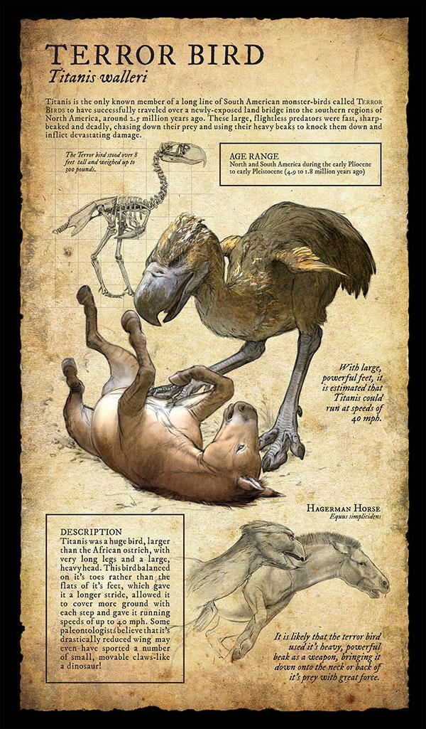 Natural History Of Carnivores