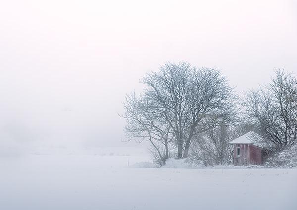 Foggy winter dreams