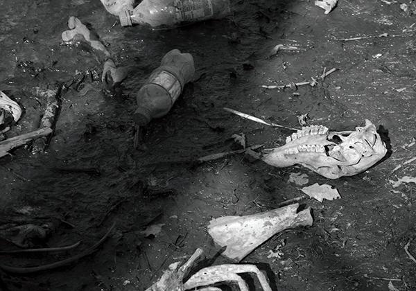 debris decay bones skeletons deer trash Environmentally Concerned Photography black and white