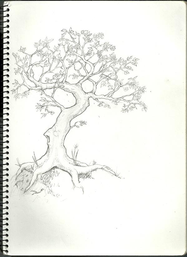 Rough Pencil Sketches Pencil Sketches Rough or
