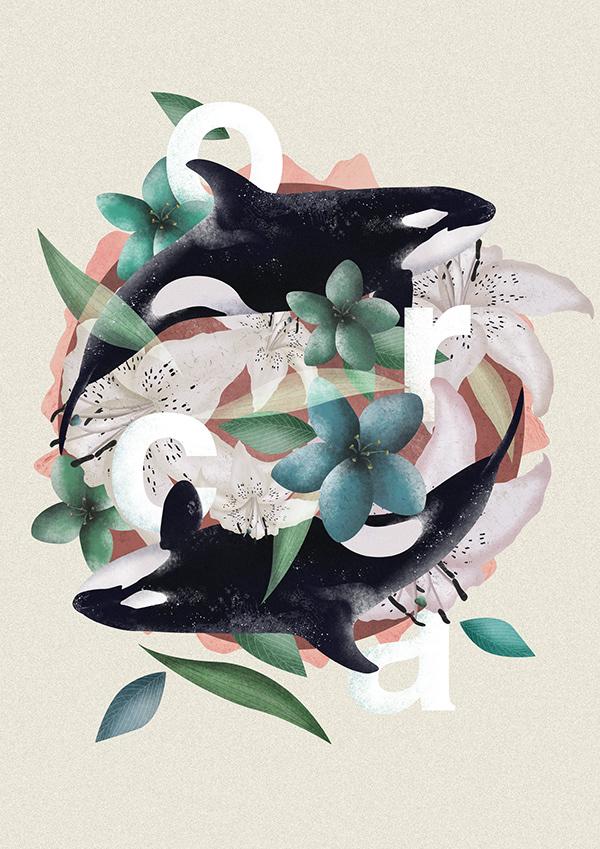 Le ballet des orques / illustration