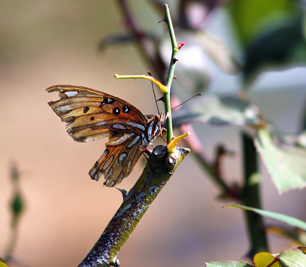 Insects hospice garden butterfly dragonfly