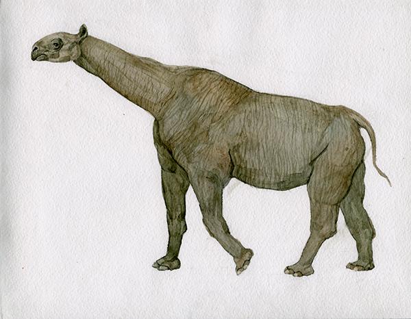 Cenozoic Era Animals Related Keywords - Cenozoic Era ...