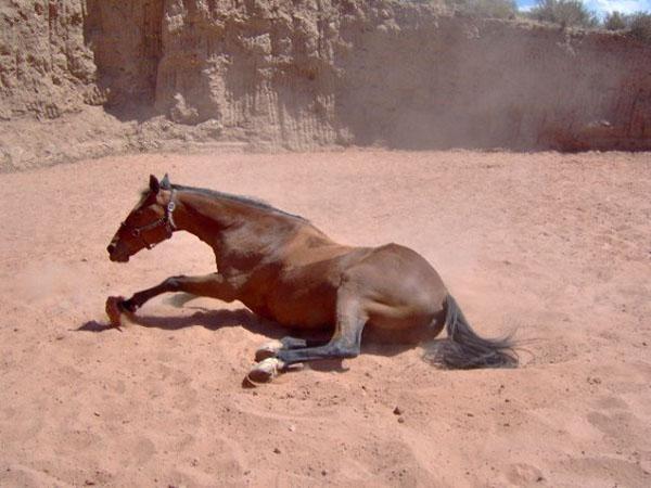 Desert Photography Landscape horses