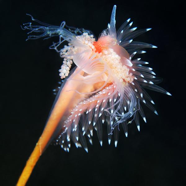 underwater monsters creatures science Nature