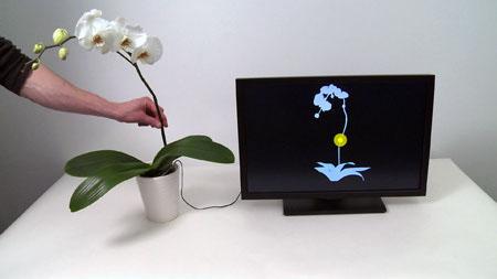 plants Touché
