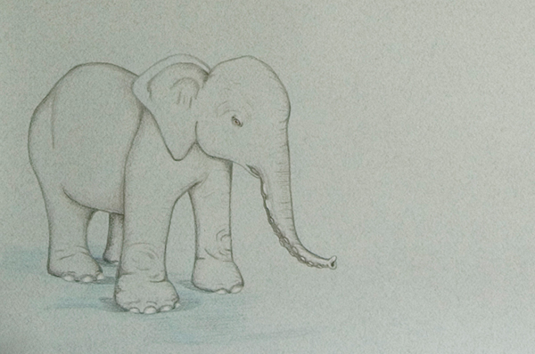 animals polymorphy