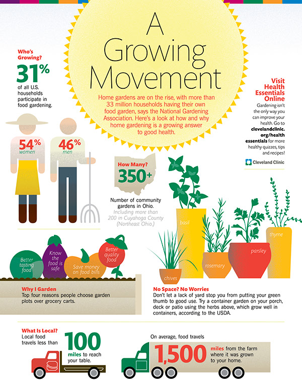 infographic  Illustration  gardening