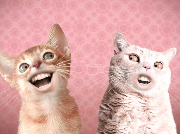 Numa Numa Cat Animation