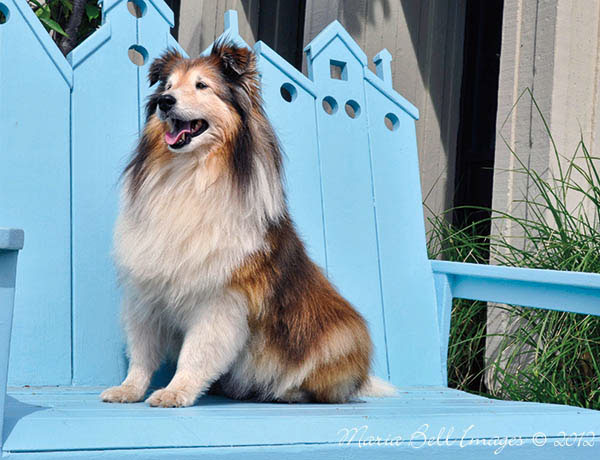dogs  Oakville Ontario Canada maria bell animal Pet pets canine maria bell dog
