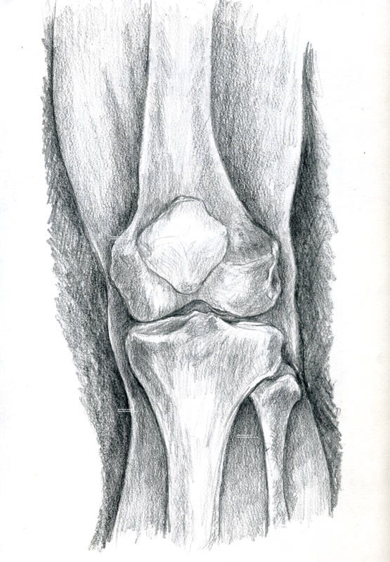 medical illustration bones knee Knie medizinische Illustration