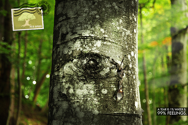Tree  Deforestation save nature green romania Carpathian forests