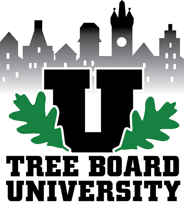 Image result for tree board university