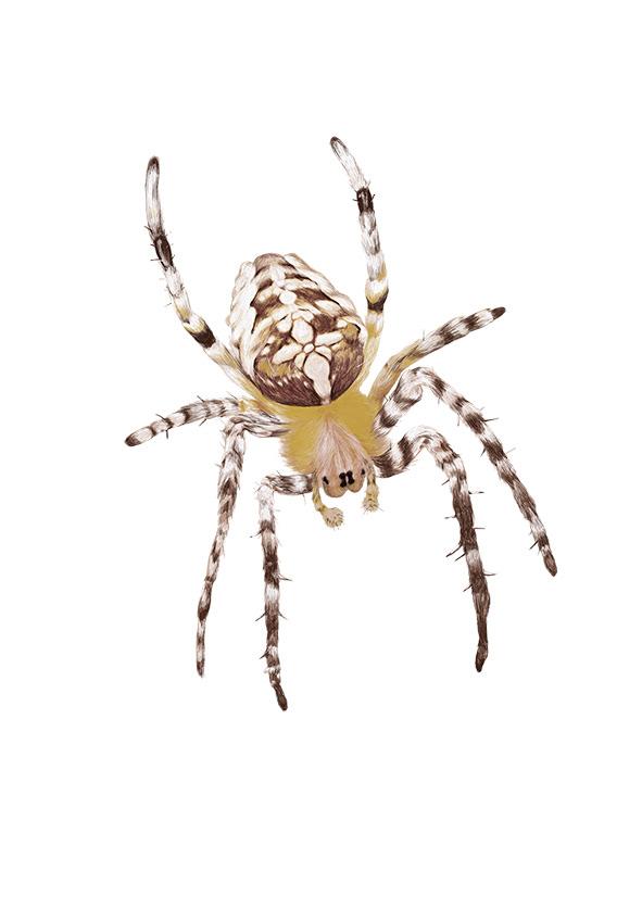 Image may contain: invertebrate, arthropod and animal