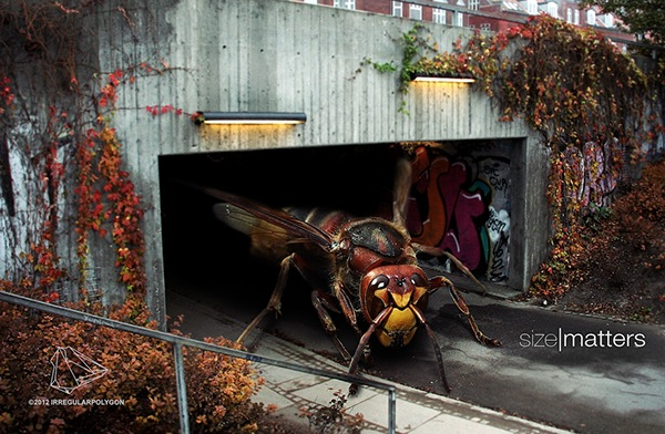 manipulation  photoshop  photo   insects  monster  gigant