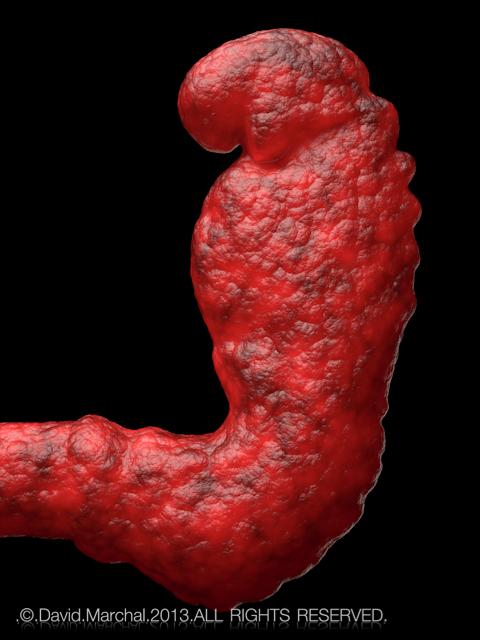 3 Week Human Embryo Human Fetus at 3 Weeks