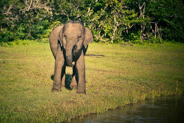 Surf elephant monkey plane Sri lanka beach Sun sunset rail road