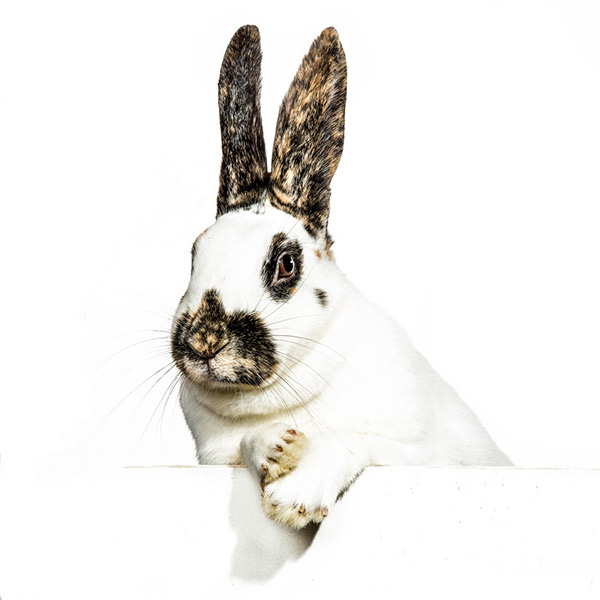 rabbit bunny animal graphic clean funny