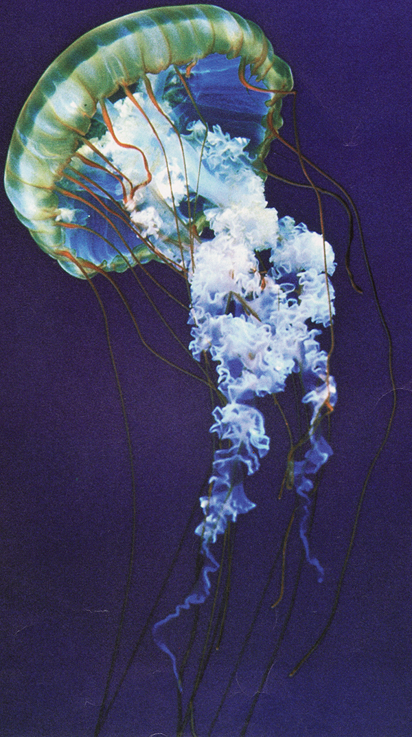film posters indie film retro posters jelly fish