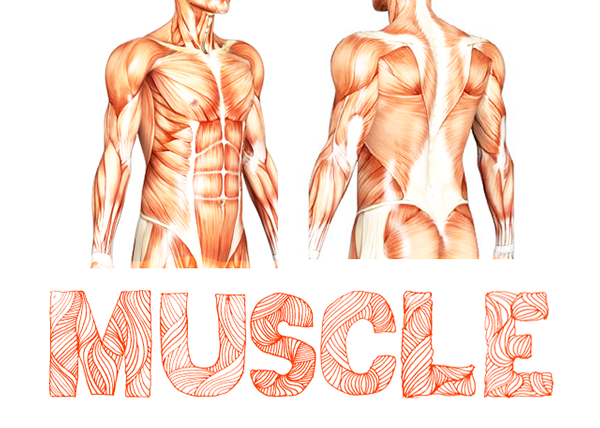 Muscle-fresh-free-fonts-2012