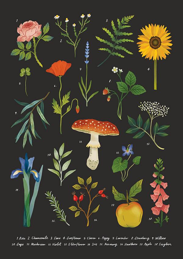 Botanic Illustration Art Poster