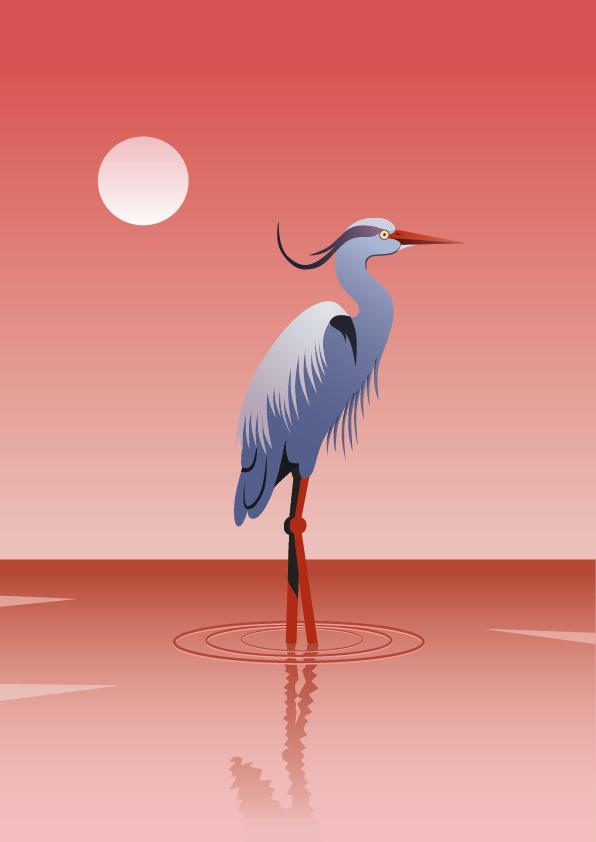 Image may contain: bird and aquatic bird