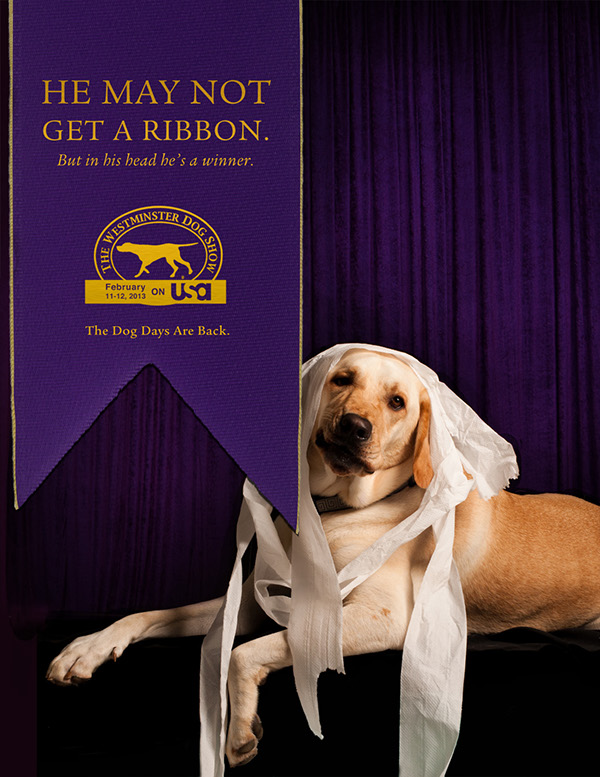 dogs, westminster,Dog show,advertisments,pets