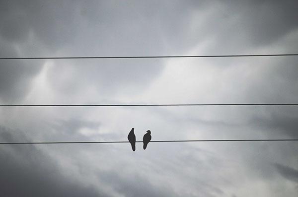 Fotografia Delfina Linares Serie paloma antisocial