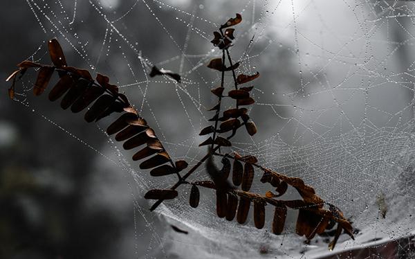 Winter is Here...Spider Webs