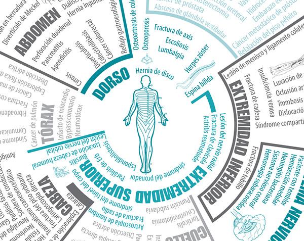 Infografía: Anatomía Humana on Behance