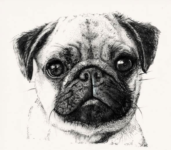 WIP Hand drawn Pug Patterns On Behance
