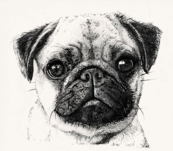 Wip Hand Drawn Pug Patterns On Behance