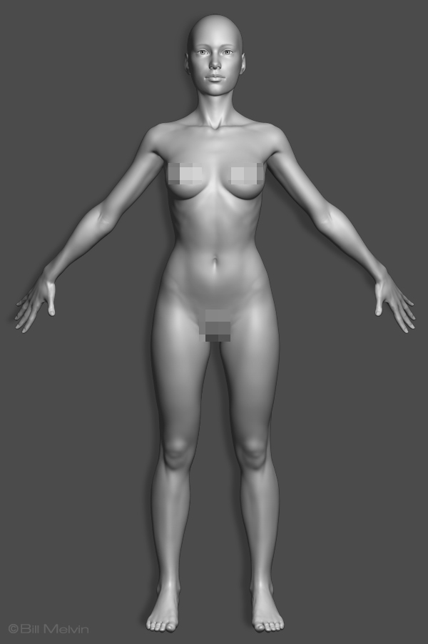 Attractive Female Anatomy 3d Model Image Collection - Anatomy And ...