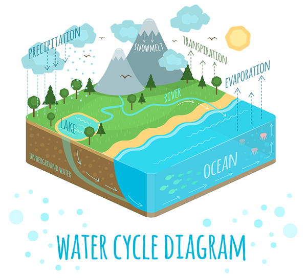 Water Cycle Diagram On Student Show