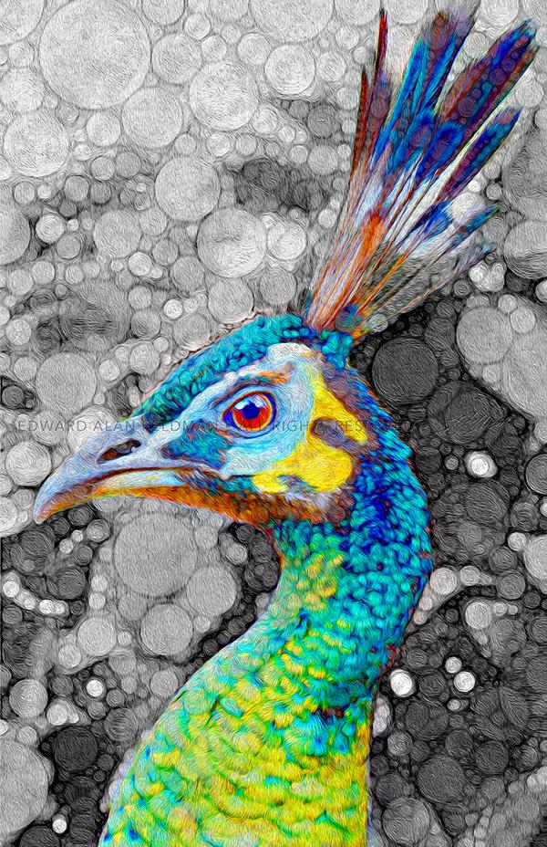 peacock,bird