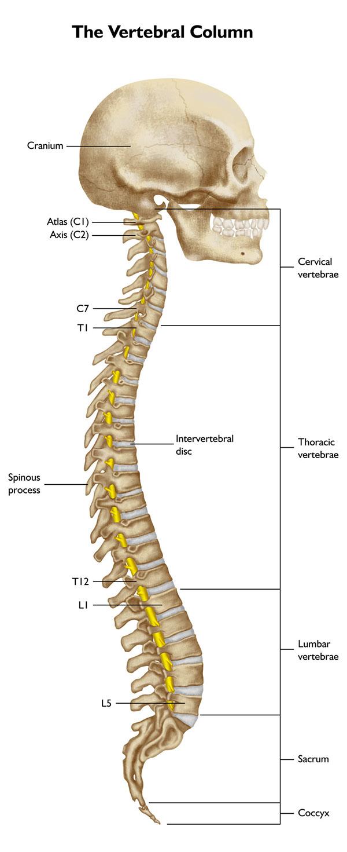 Spine Illustration On Behance