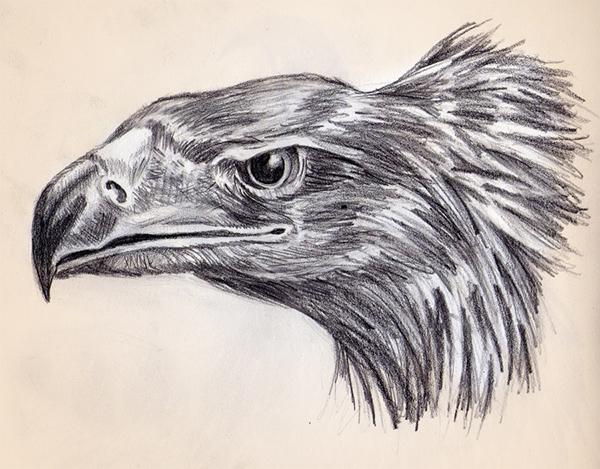 Animal Drawings on Behance