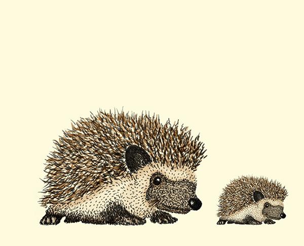 porcupine on los andes portfolios