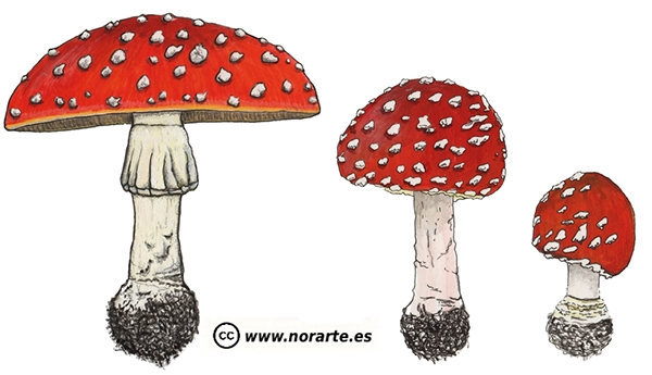 Fly Agaric Drawing Fly Agaric Amanita Muscaria