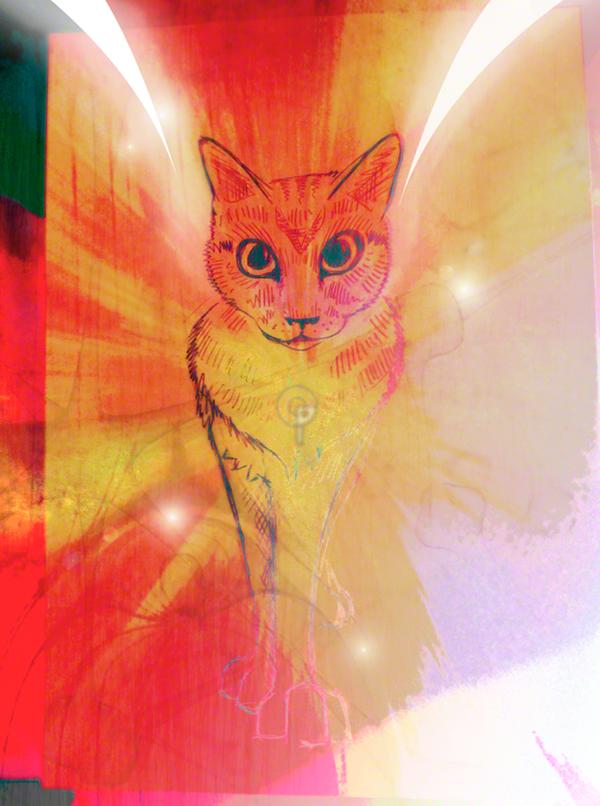 aryes notte inquieta gatto  cat