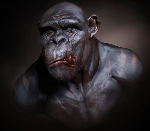 Chimpanzee muscles