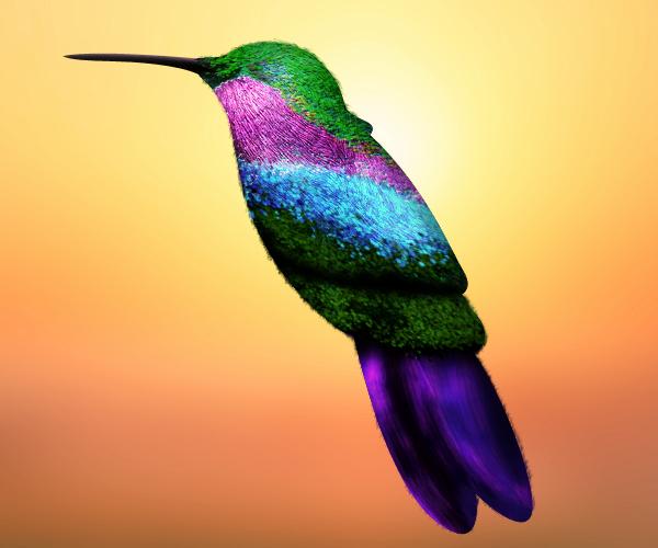 hummingbird  Illustration ilustracion mexico colibri arte digital