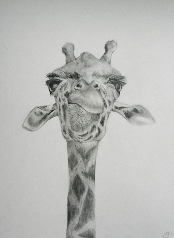 Cute Drawings of Giraffes Giraffe Drawing on Behance