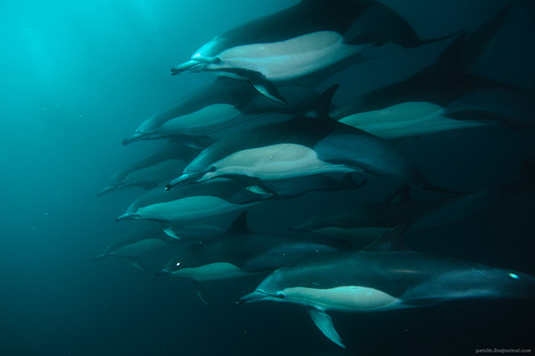 underwater  sharks  whales  dolphins diving UNDERWATER PHOTOGRAPHY Galapagos cocos south africa bait ball Schools
