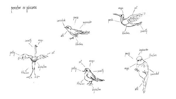 Understanding Birds