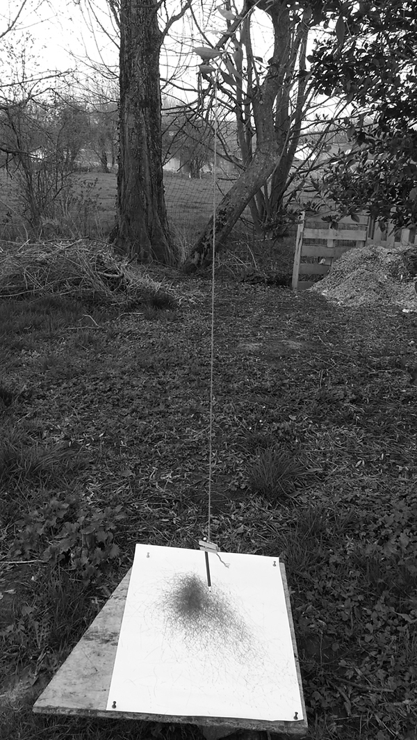 Tree  Diary journal arbre site en ligne