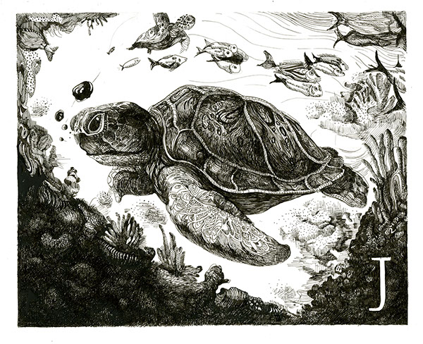Pen & Ink under the sea sophomore ringling college of