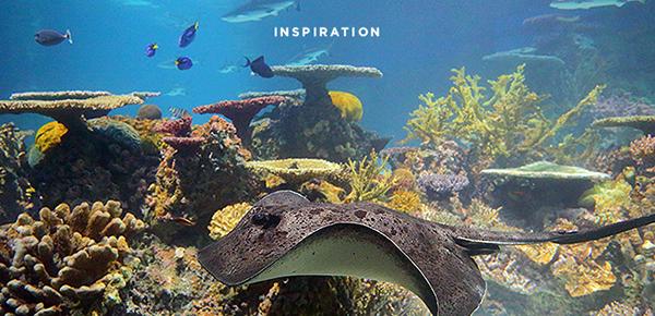 National Aquarium Visual Brand Refresh on PhilaU Portfolios