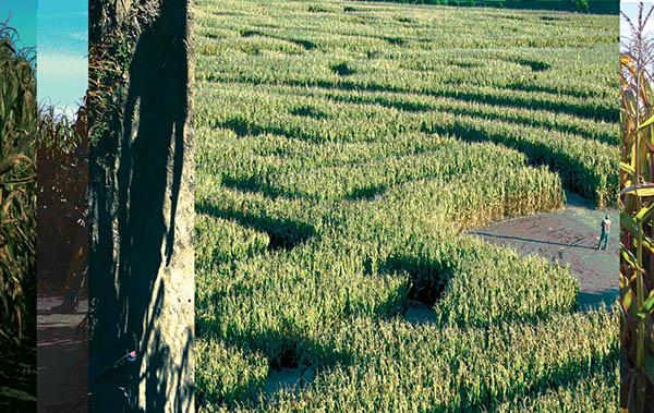 frozen moment corm maze decision near dark