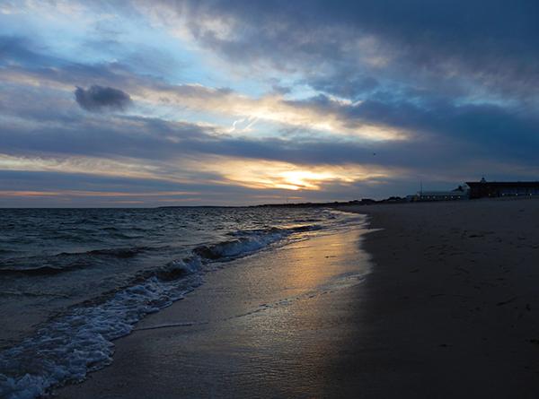 beach  photos  seagulls trees branches sunsets Sun SKY water photos seagulls